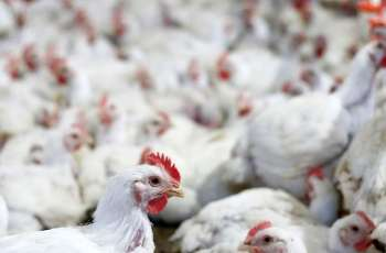 Philippines Bans Poultry Imports From Brazil After Finding COVID-19 Samples - Reports