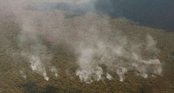 Greenpeace Alarmed Over Amazon Wildfires Reaching Highest Intensity Over Past Decade