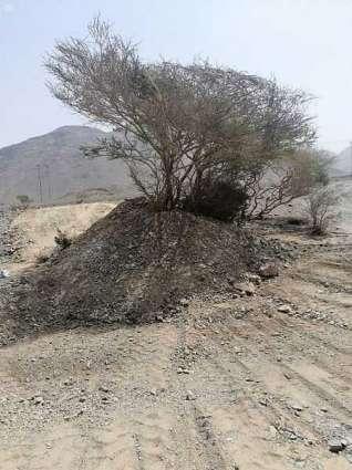 أمانة المدينة المنورة تستكمل المرحلة الأولى من تأهيل وإعادة الأشجار المتضررة بالمنطقة