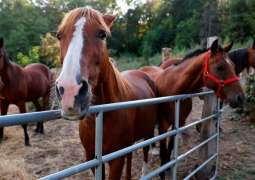France Sees Another Animal Mutilation Case Amid Mysterious Equine Attacks - Reports