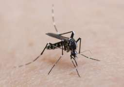 Dutch Woman Contacts Dengue Fever in Southern France - Reports