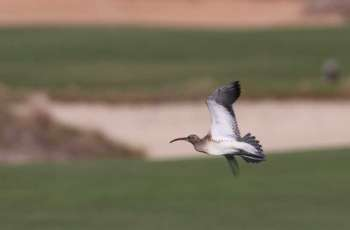 A world first for Abu Dhabi as ultra-rare bird stops over
