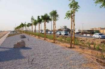 الخدمات العامة برأس الخيمة تنجز تشجير شارع الشهداء بطول 6100 متر