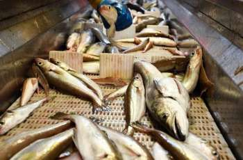 UK Signs 'Historic' Fisheries Deal With Norway - Gov't