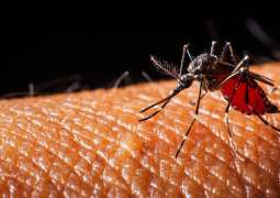 Paraguayan Health Ministry Warns of Increase in Dengue Infections