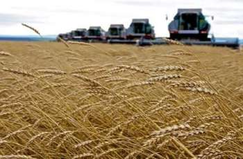 Wheat Harvest Yields in Russia Might Reduce to 78Mln Tonnes in 2021- Agriculture Institute