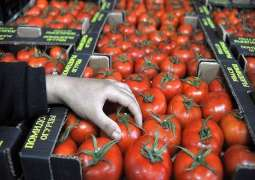 Russian Food Watchdog Mulls Ban on Imports of Tomatoes From Turkey's Hatay, Trabzon