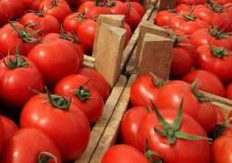 Russia Food Safety Watchdog to Query Morocco Over Pepino Mosaic Virus in Tomato Imports