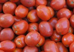 Russian Agriculture Watchdog Allows Tomatoes Supplies From 12 Azeri Companies From Dec 24