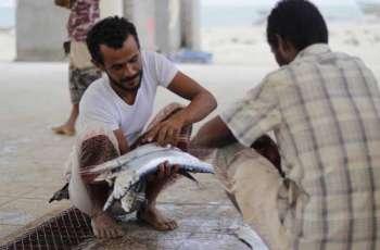 منظمة (الفاو) تقدم الدعم لأكثر من 8,000 أسرة يمنية من مجتمعات الصيد بالتعاون مع مركز الملك سلمان للإغاثة