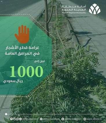 أمانة المدينة المنورة تؤكد ضرورة المحافظة على الممتلكات العامة والأشجار والمزروعات بشتى أنواعها