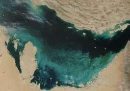 """علماء """"نيويورك أبوظبي"""" ينجزون دراسة بحثية حول الاختلافات الجينية بين الطحالب البحرية"""