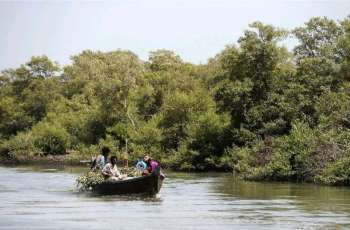 Depletion of mangroves: ecosystem posing threat to sea communities, biodiversity