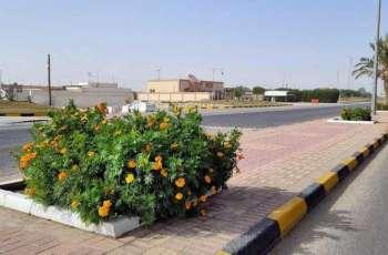 أمانة الشرقية تنفذ أعمال زراعة 1500 زهرة وتركيب 15 مظلة بحدائق الصرار