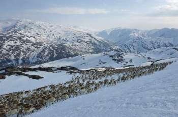 Norway's Indigenous Herders Sue Against Wind Farm Disturbing Reindeer Routes - Reports