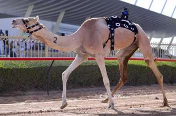 مكتوم بن حمدان بن راشد يشهد تحديات الثنايا لهجن الشيوخ في مهرجان ولي عهد دبي