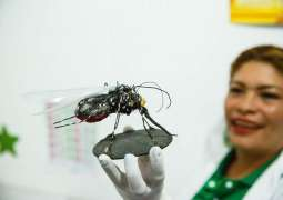 El Salvador Becomes First Malaria-Free State in Central America - Health Agency