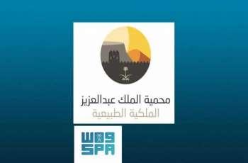 إطلاق عدد من ظباء الريم والمها العربي بمحمية الملك عبد العزيز الملكية