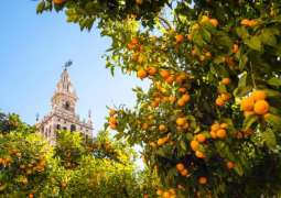 Spanish Utility Turning Oranges Into Green Energy