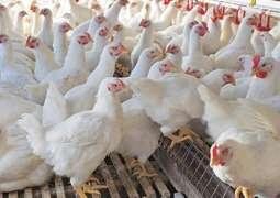 Boycott Chicken becomes top trend in Pakistan