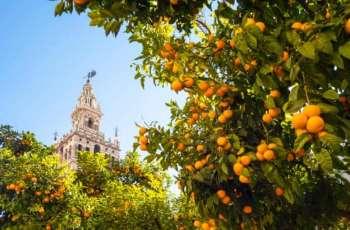 Spanish Utility Turning Oranges Into Green Energy