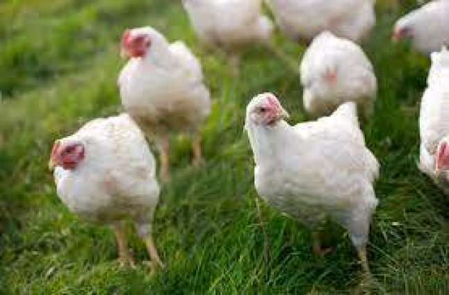 Increase in Chicken prices challenged before LHC
