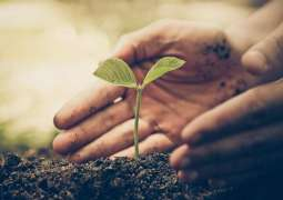 Tree plantation promotes societal and environmental revitalisation