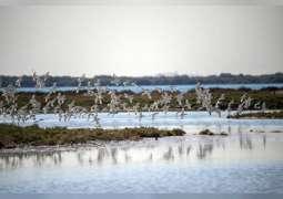 سواحل أم القيوين و محمياتها الطبيعية موطن للطيور المهاجرة