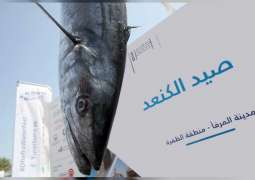 Al Dhafra Grand Kingfish Championship for men and women to kick off Friday