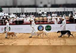 ADIHEX launches Arabian Saluki Beauty Contest