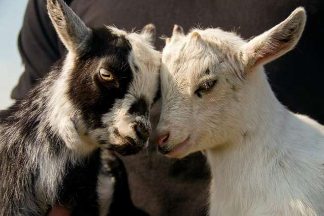 UK Government Unveils Action Plan Recognizing Animals as Sentient Beings