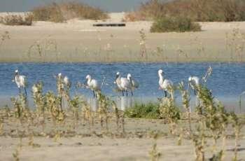 """""""الإمارات للألمنيوم"""" تزرع 10 آلاف شجرة قرم بمحمية جبل علي للحياة الفطرية"""