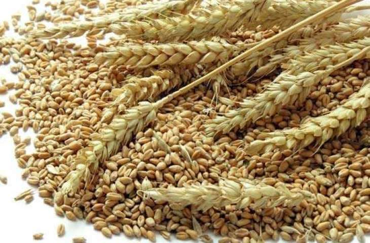 Syria to Import 1Mln Tonnes of Russian Wheat This Year - Economy Minister