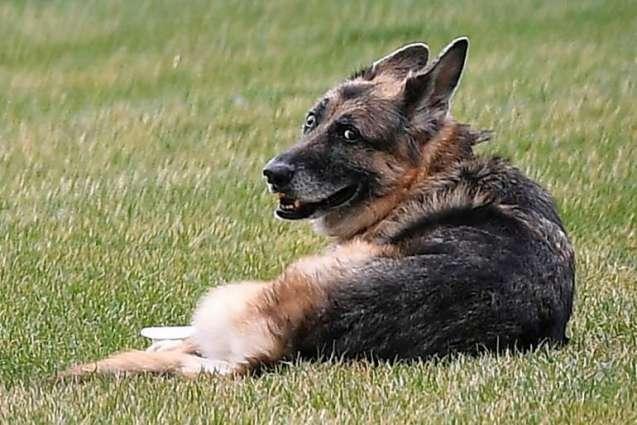 Bidens' German Shepherd Champ Dies at 13
