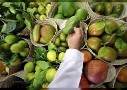"""""""هيئة أبوظبي للزراعة"""" تنظم محاضرات توعوية افتراضية في مهرجان ليوا للرطب"""