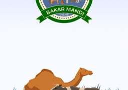 Sale of animals worth Rs. 55 Million reported through Bakar Mandi Online app