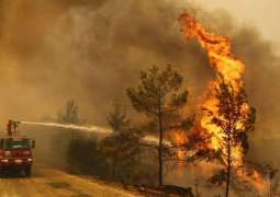 All Forest Fires in Turkey Under Control Except for 2 in Mugla Province - Minister