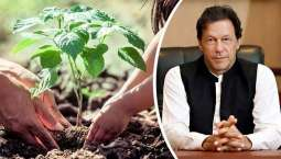 Lungs of earth: PM's forests initiative to help create biggest carbon sinks