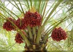 """""""أبوظبي للزراعة"""" .. التزام بتطوير وتنمية قطاع النخيل وتعزيز استدامته"""