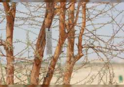 Environment Agency - Abu Dhabi begins numbering historical, endangered local trees