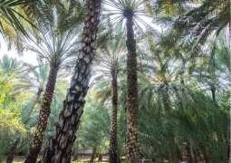 Decision to register agricultural land leases in Abu Dhabi