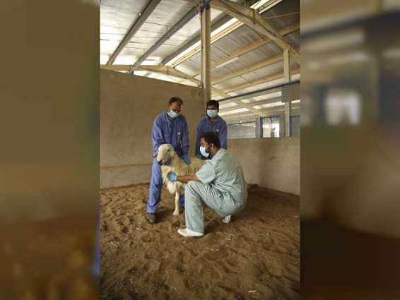 ADAFSA launches 13th livestock vaccination campaign, targets over 2 million animals