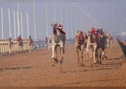 مكتوم بن حمدان بن راشد يشهد ختام فعاليات تمهيدي سباق الهجن بميدان المرموم