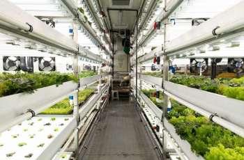الزراعة المستدامة تعزز نهج دبي لمستقبل مستدام