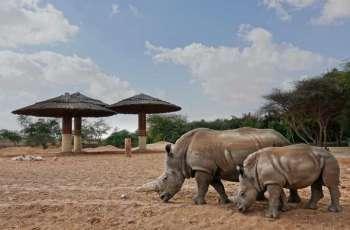 حديقة الحيوانات بالعين تدمج مولود وحيد القرن الأبيض الجنوبي
